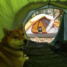 Cute camping trip.