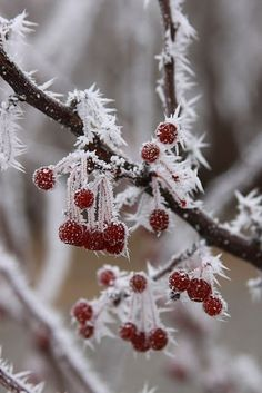Frozen berries, red&white #red&white #frozen