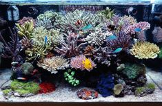 Living art, I LOVE this!  Check out all of those corals!
