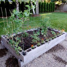 Raised Garden Bed From Cinder Blocks