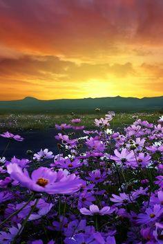 Ideas wallpaper paisagem por do sol Eckhart Tolle Meditation, Flower Carpet, Beautiful World, Beautiful Places, Landscape Photography, Nature Photography, Photography Flowers, Spring Scenery, Flower Landscape