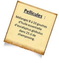 L'huile essentielle eucalyptus globulus est efficace contre les affections respiratoires et les douleurs : Nos recettes avec l'eucalyptus globulus