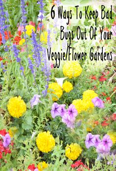 6 Ways to keep bad bugs out of your vegetable and flower gardens.