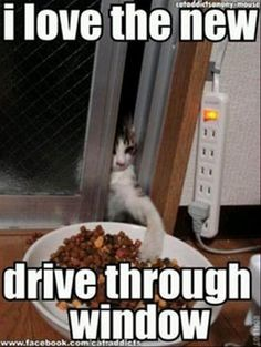 Funny Animal Pictures - View our collection of cute and funny pet videos and pics. New funny animal pictures and videos submitted daily. Funny Animal Memes, Funny Animal Pictures, Cute Funny Animals, Cat Memes, Funny Cute, Cute Cats, Hilarious, Animal Humor, Funny Farm