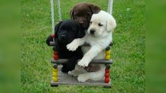 17 Cute Photos Of Dogs On Playground Swings - Rantpets - http://www.rantpets.com/2015/11/22/17-cute-photos-of-dogs-on-playground-swings/