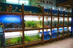 . Aquarium Shop, Fish Room, Fish Breeding, Tropical Fish Tanks, Animal Room, Fish Farming, Fish Ponds, Pet Cage, Discus
