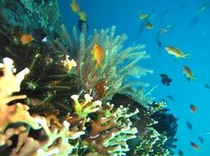 Blue Paradise Diving - Day Tours