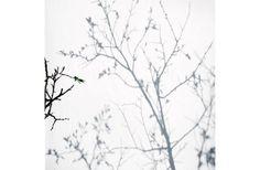 Olga Chagaoutdinova |In the Time of Sakura no.2 | Photographie impression jet d'encre (inkjet photography) |2011