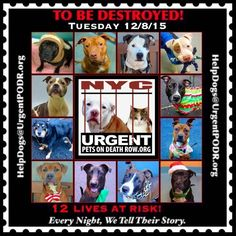TO BE DESTROYED 12/08/15 - - Info  **TO BE DESTROYED** -  Click for info & Current Status: http://nycdogs.urgentpodr.org/to-be-destroyed-4915/