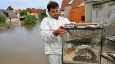 Pet rescue - snake rescued from flooded house in Putim, Czech, June 2013