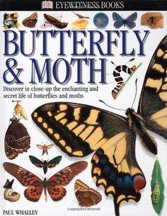 Butterfly & Moth (DK Eyewitness Books) by Paul Whalley http://www.amazon.co.uk/dp/0789458322/ref=cm_sw_r_pi_dp_08L3tb1Q9PM86VDJ