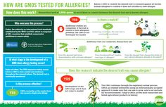 Are #GMOs tested for #allergies? Yes! Check out the process.