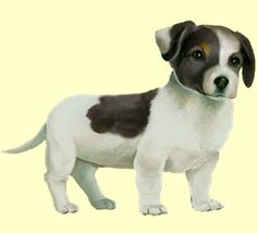 Jack Russell Puppy - coat 35  cloud!! dogzer