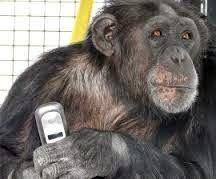 Lost in America: Digital Chimpanzees