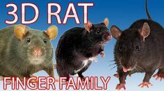 Rat Finger Family Nursery english 3d  rhymes    Children Animated finger...