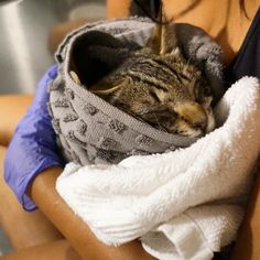 A couple from Brooklyn New York came across a sickly little kitten sitting on the sidewalk while they were feeding community cats. They got her off the streets and went back to find her siblings.Will and Divya of Flatbush Cats, a TNR-focused cat rescue in Flatbush, Brooklyn, found a kitten sitting i...