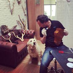 Coco vind het wel genoeg zo🙄 Tijd voor een rondje Amstel🐶 #gewei #geweldiggewei #hond #dog #chesterfield #amsterdam