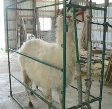 Image result for llama chute Horses, Life, Animals, Image, Animaux, Horse, Animal, Animales, Animais