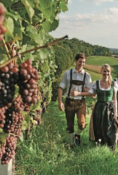 Die Winzer und Weingärten der Region laden zum romantischen Picknick mit köstlichen Produktion aus der Region. #badgleichenberg #regionbadgleichenberg Fruit, Autumn, Wine Vineyards