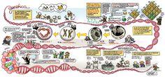 Titel  Wetenschappen in beeld -  De Heer, Margreet -  plaats 530 # Natuurkunde