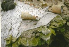 Fallen Birch Bark Log With Moss Nature Photography on Blank Note Card by TheOldBarnDoor on Etsy,