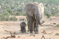Giving Birth to an Elephant - the long wait in #adoption
