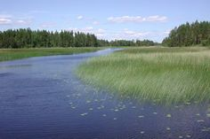 http://ramsar.rgis.ch/pictures_2009/Country/sweden-gustavsmurarna-peter-st%C3%A5hl.jpg