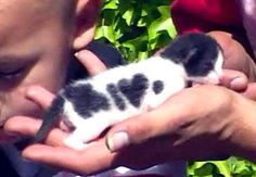 "Itty bitty kitty with heart so pretty. (It actually looks like it spells out ""I Heart ""dot."" The mother was reportedly named ""Dottie. I Love Cats, Cool Cats, Kittens Cutest, Cats And Kittens, Baby Animals, Cute Animals, Animal Babies, Nature Animals, Funny Animals"