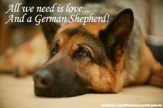 Love and a German Shepherd