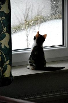 Contemplating the weather.
