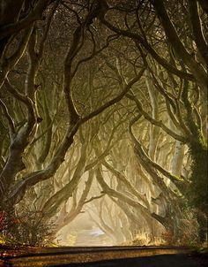 I would just love to walk through this forest.......so eerily peaceful!