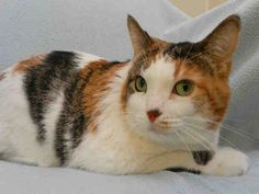 Chelsea has been adopted after a long stay at the shelter. We'll miss you, sweet lady!