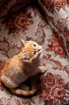 Cat by Egor Fedorov
