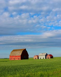 Abandoned barns south of Regina, SK Canada Travel, Barns, Abandoned, Cabin, Sky, Live, House Styles, Photography, Left Out