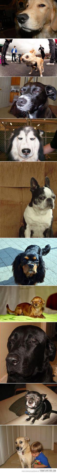 Suspicious dogs are suspicious
