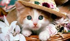 sweet......