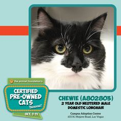 ** ONLY A FEW HOURS LEFT TO ADOPT A FEE-WAIVED CAT! ** Great cats like Chewie are waiting for you at our Campus Adoption Center (open until 7pm) and our PetSmart Charities Everyday Adoption Center (open until 8pm)! Adoption fees for all cats 6 months and older are waived, and adoption fees for kittens under 6 months are only $25! Details: animalfoundation.com.