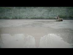 BVB gegen Fremdenhass