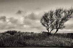 Empty Bench Naked Trees - Original fine art black and white landscape photography by Bob Orsillo.  Copyright (c)Bob Orsillo / http://orsillo.com All Rights Reserved   Buy art online. Buy photography online