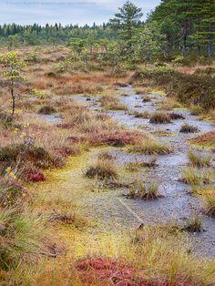 Kurjenrahkan kansallispuisto 28.9.20138:21. Vajosuo. Vajosuo mire, Kurjenrahka National Park.