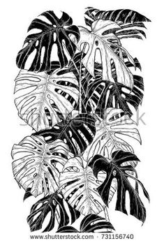 Monstera leaf sketch by hand drawing.Monstera vector set on white. Leaf Drawing, Floral Drawing, Nature Drawing, Leaves Sketch, Dinosaur Tattoos, Colored Pencil Artwork, Architecture Concept Drawings, Flamingo Art, Plant Illustration