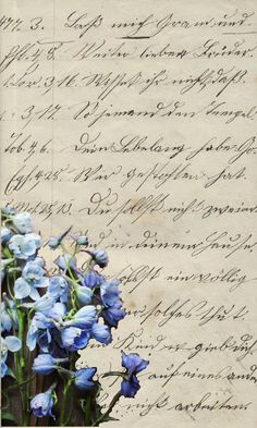 Marvelous De Oude Huize Yard Delphiniums from the garden