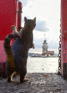Maiden's Tower-istanbul by Yaşar Koç - Animals I Love Cats, Crazy Cats, Cute Cats, Funny Cats, Animals And Pets, Baby Animals, Cute Animals, Funny Cat Photos, Tier Fotos