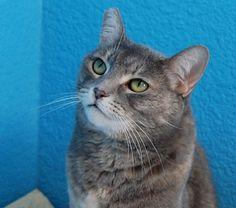Rosettahttp://www.nevadaspca.org/adoptable-animals/adoptable-cats/animal/1467