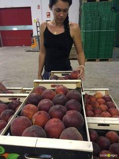 Local Agro Classifieds Сотрудничество - FRUITS - Valencia - FREE INTERNATIONAL CLASSIFIEDS