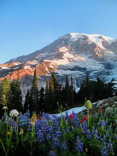 Mt. Rainier, WA. One of my favorite places to hike!
