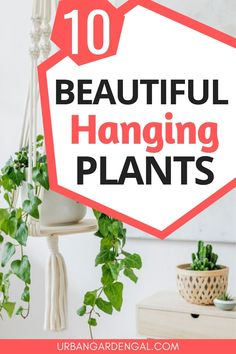 Hanging indoor plants are an excellent addition to indoor gardens. Here are 10 beautiful hanging houseplants to add to your plant collection. Air Cleaning Plants, Air Plants, Indoor Plants, Indoor Gardening, Gardening Tips, Easy Garden, Home And Garden, House Plant Care, Bathroom Plants