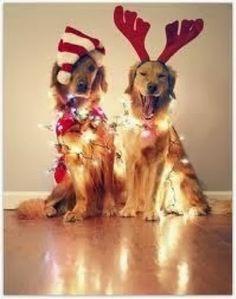 Christmas dogs!