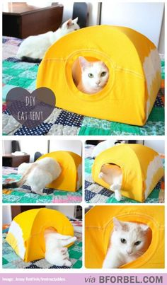 DIY Cat Tent from a T-Shirt and a Wire Hanger – love this idea! My cats kill eve… DIY Cat Tent from a T-Shirt and a Wire Hanger – love this idea! My cats kill everything, so Im forever replacing expensive cat hideaways. Crazy Cat Lady, Crazy Cats, Diy Cat Tent, Cat Hacks, Animal Projects, Fun Projects, Here Kitty Kitty, Sleepy Kitty, Kitty Cats