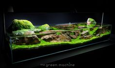 Beautiful -  TGM - Continuity Aquascape by James Findley